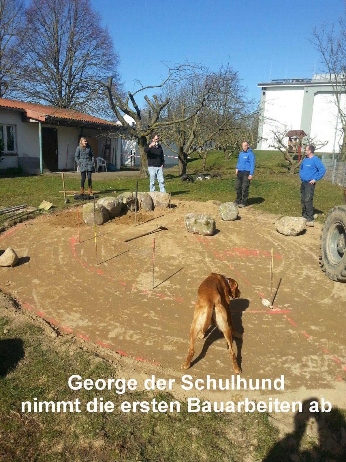 12 George, der Schulhund, nimmt die ersten Bauarbeiten ab